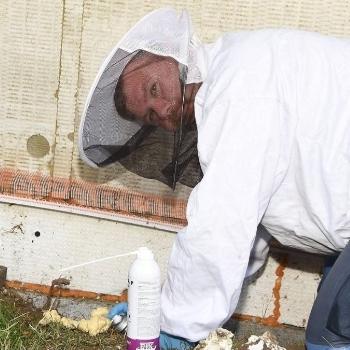 Wespen besser umsiedeln statt töten | Björn Nöchel Hygieneservice